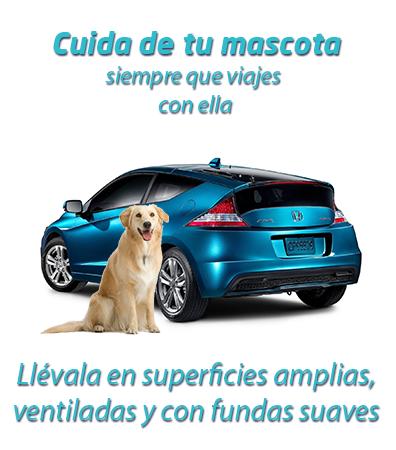 Viaja con tu mascota